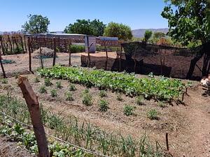 vingerkraal bela-bela food garden